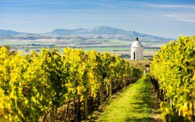 Dovolená v Česku aneb putování za vínem